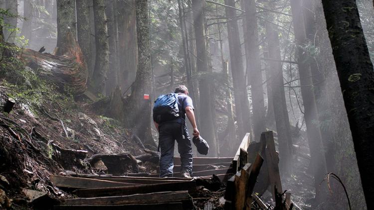 Hiking in BC's forests